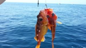 fish hook